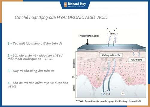 Cơ chế hoạt động của acid Hyaluronic ( HA)
